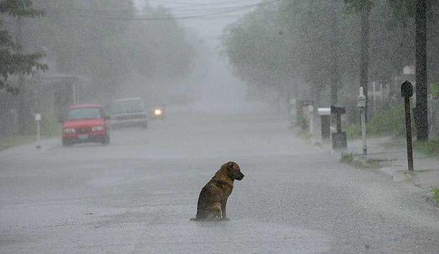 dog rain